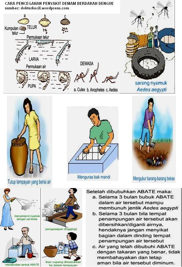 Cara Mencegah dan Menyembuhkan Penyakit Demam Berdarah Dengue (4/4)