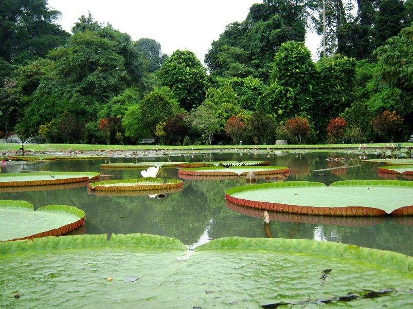 Kebun Raya Bogor1-1340738971