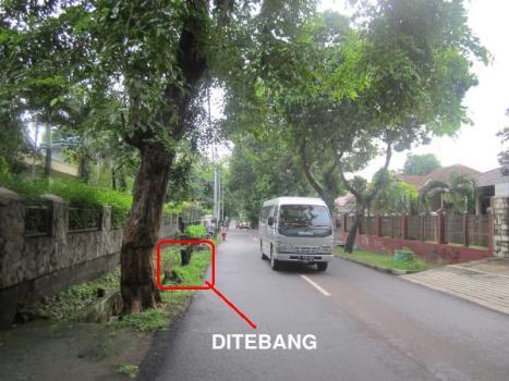 Pohon Rindang 2