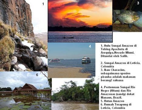 Sungai Amazon 2