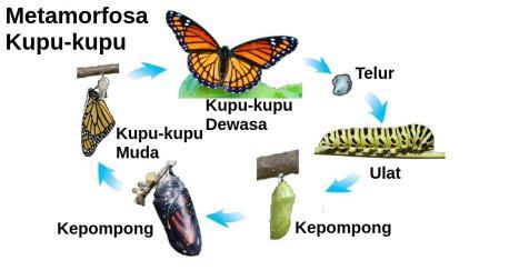 Metamorfosa kupu kupu bagus
